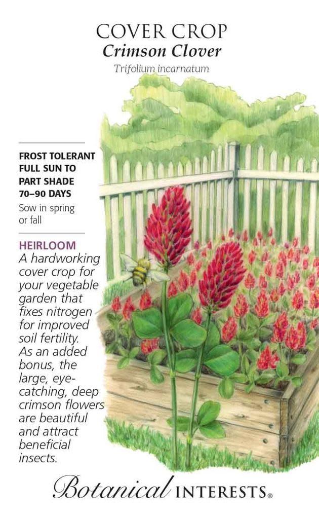 Seed Cover Crop Crimson Clover Heirloom - Trifolium incarnatum - Lrg Pkt