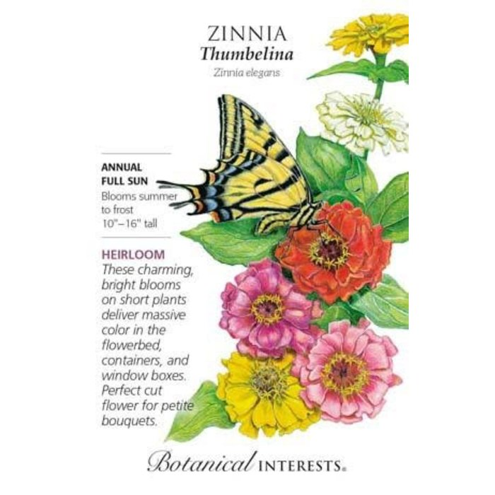 Seed Zinnia Thumbelina Heirloom - Zinnia elegans