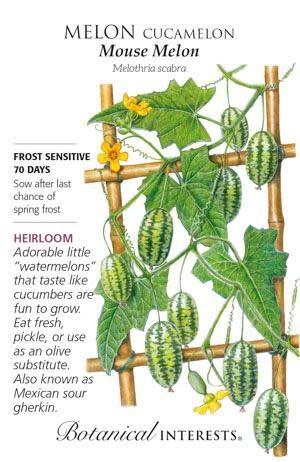 Seed Melon Cucamelon Mouse Melon Heirloom - Melothira scabra