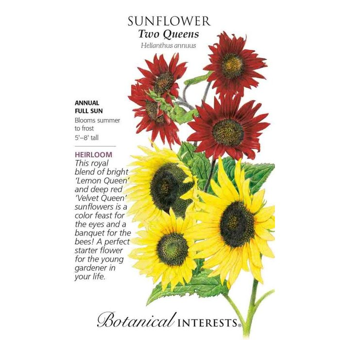 Seed Sunflower Two Queens Heirloom - Helianthus annuus - Lrg Pkt