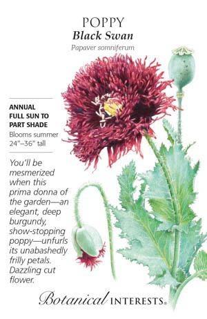 Seed Poppy Black Swan - Papaver somniferum