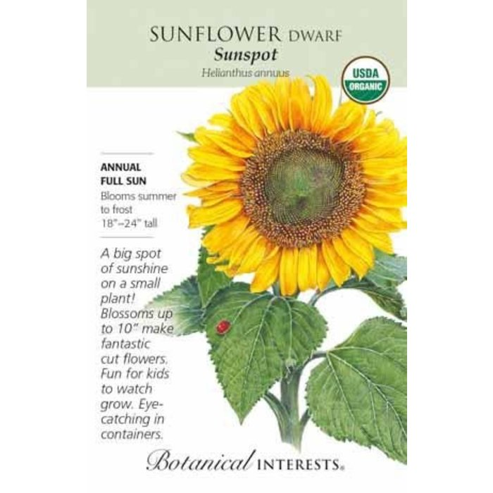Seed Sunflower Dwarf Sunspot Organic - Helianthus annuus