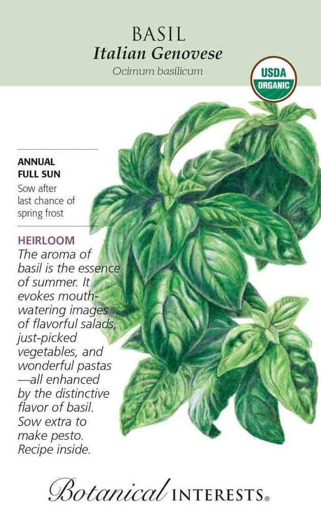 Seed Basil Italian Genovese Organic Heirloom - Ocimum basilicum Lrg Pkt