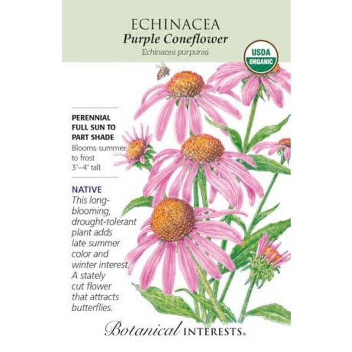 Seed Echinacea Purple Coneflower Organic Heirloom Native - Echinacea purpurea