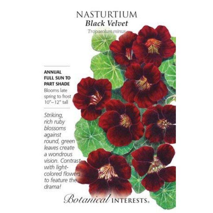 Seed Nasturtium Black Velvet - Tropaeolum minus