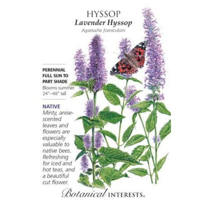 Seed Hyssop Lavender Heirloom Native - Agastache foeniculum