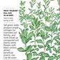 Seed Cover Crop Fava Bean Organic - Vicia faba - Lrg Pkt