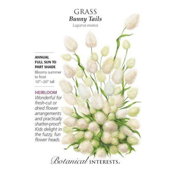 Seed Grass Bunny Tails - Lagurus ovatus