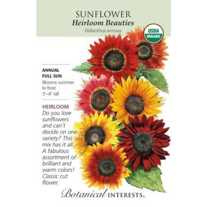 Seed Sunflower Heirloom Beauties - Helianthus annuus