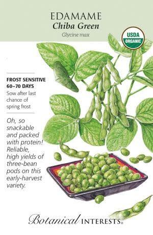 Seed Edamame Chiba Green Organic