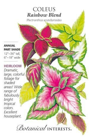 Seed Coleus Rainbow Blend Heirloom - Plectranthus scutellarioides