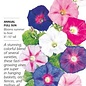 Seed Morning Glory Sunrise Blend - Ipomoea purpurea