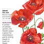 Seed Poppy Flanders American Legion Heirloom - Papaver rhoeas