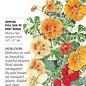 Seed Nasturtium Alaska Variegated Heirloom - Tropaeolum majus