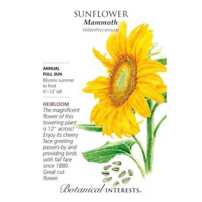 Seed Sunflower Mammoth Heirloom - Helianthus annuus