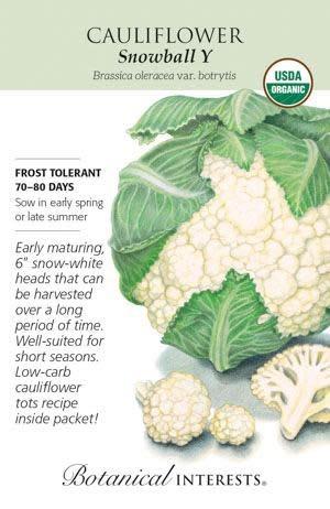 Seed Cauliflower Snowball Y Organic - Brassica oleracea