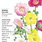 Seed Hollyhock Indian Spring - Alcea rosea