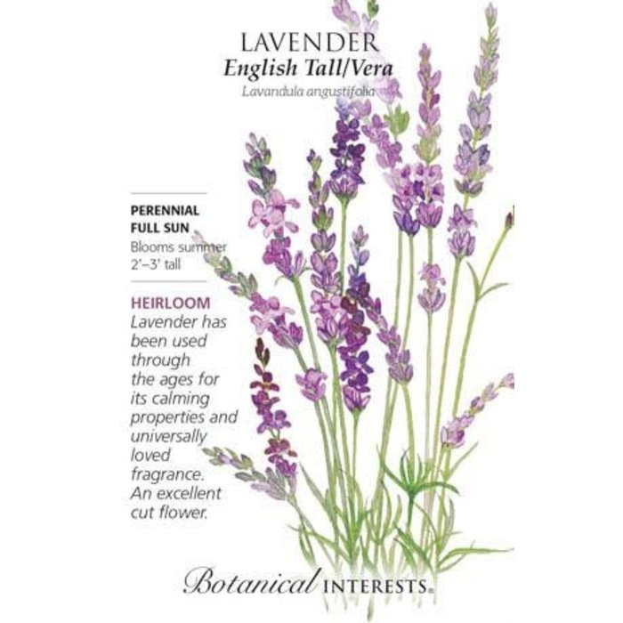 Seed Lavender English Tall/Vera Heirloom - Lavandula augustifolia