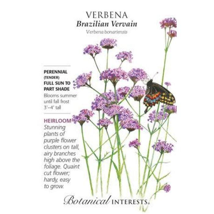 Seed Verbena Brazilian Vervain Heirloom - Verbena bonariensis