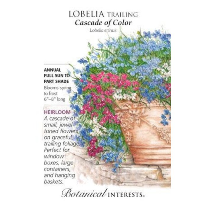 Seed Lobelia Trailing Cascade of Color Heirloom - Lobelia erinus