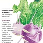 Seed Kohlrabi Purple Vienna Organic Heirloom - Brassica oleracea
