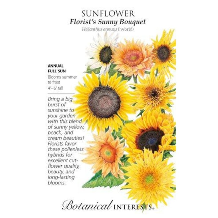 Seed Sunflower Florist's Bouquet - Helianthus annuus (hybrid) - Lrg Pkt