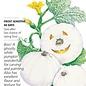 Seed Pumpkin Lumina White - Cucurbita maxima