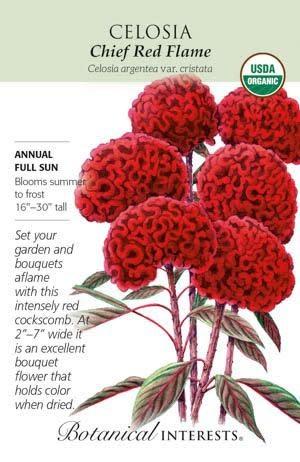 Seed Celosia Chief Red Flame Organic - Celosia argentea var. cristata
