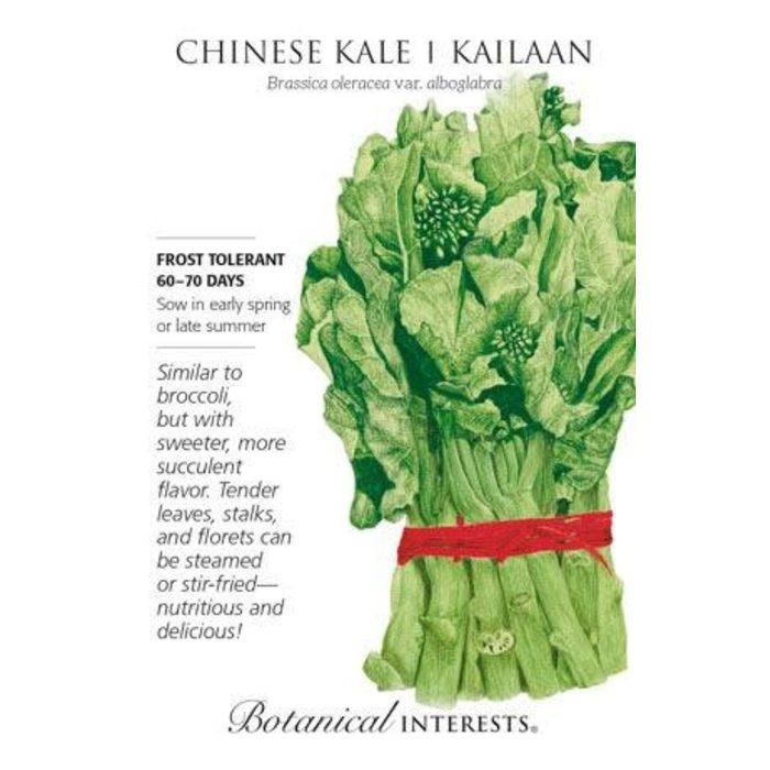 Seed Broccoli Chinese Kale Kailaan - Brassica oleracea var. alboglabra