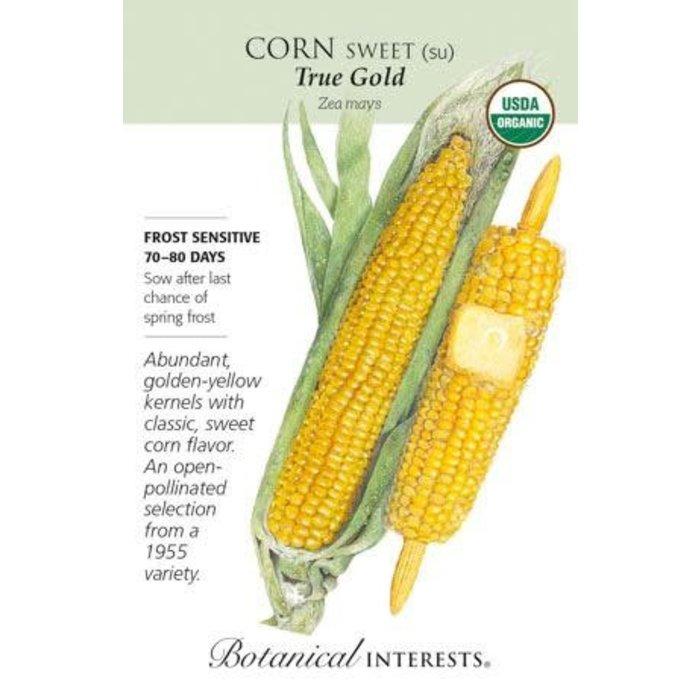 Seed Corn Sweet True Gold Organic - Zea mays