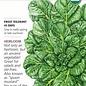 Seed Bok Choy Tatsoi Rosette Organic - Brassica rapa