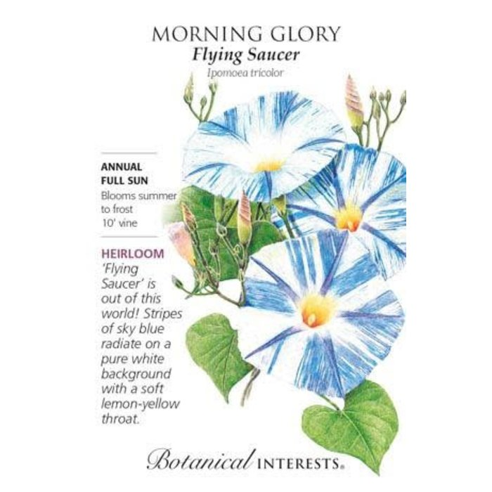 Seed Morning Glory Flying Saucer Heirloom - Ipomoea tricolor