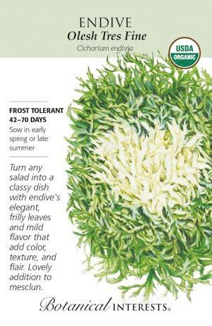 Seed Endive Olesh Tres Fine Organic - Cichorium endiva
