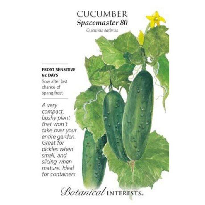 Seed Cucumber Spacemaster - Cucumis sativus