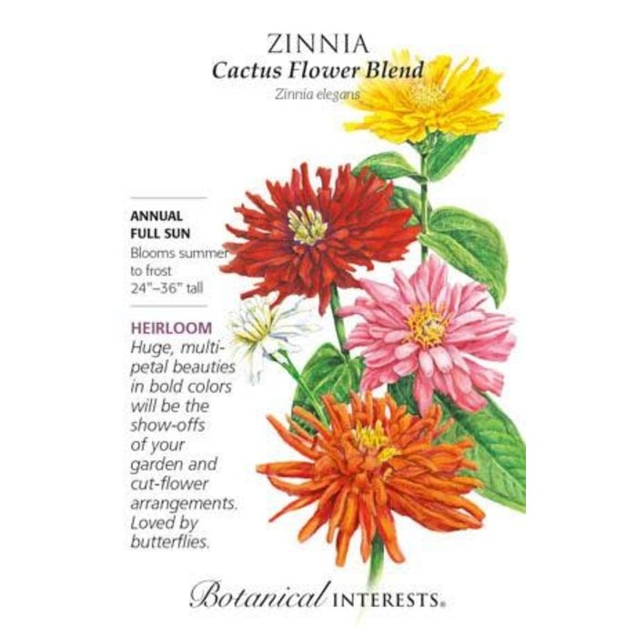 Seed Zinnia Cactus Flower Blend Heirloom - Zinnia elegans
