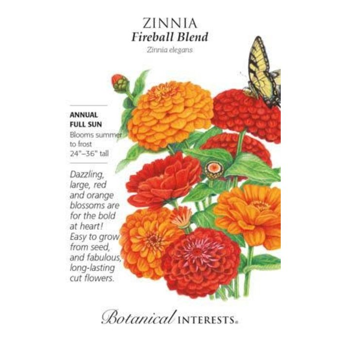 Seed Zinnia Fireball Blend - Zinnia elegans