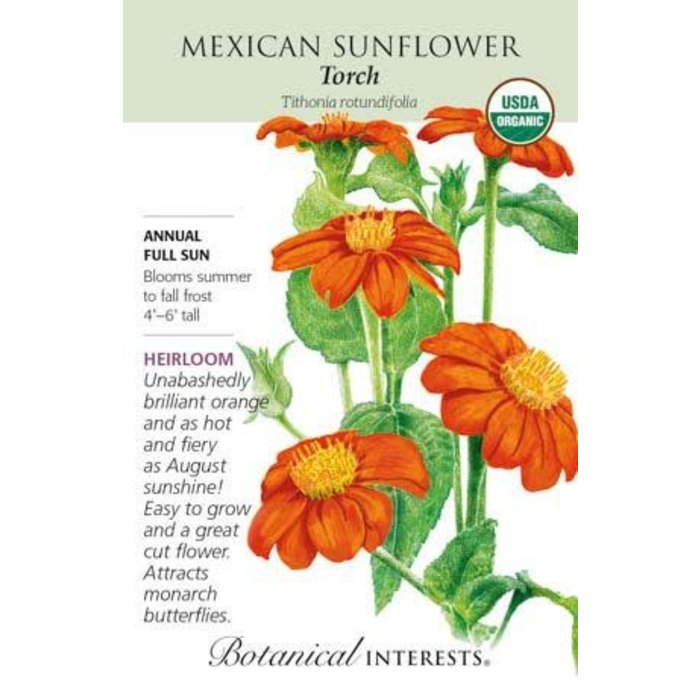 Seed Sunflower Mexican Torch Organic Heirloom - Tithonia rotundifolia