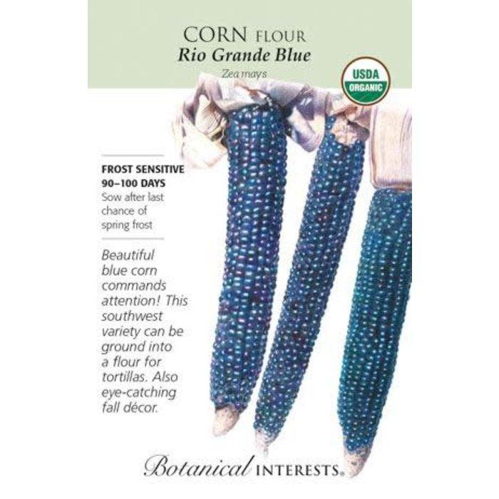 Seed Corn Flour Rio Grande Blue Organic - Zea mays