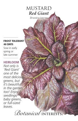 Seed Mustard Red Giant Heirloom - Brassica juncea