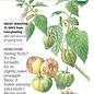 Seed Ground Cherry Pineapple Heirloom Organic - Physalis pruinosa