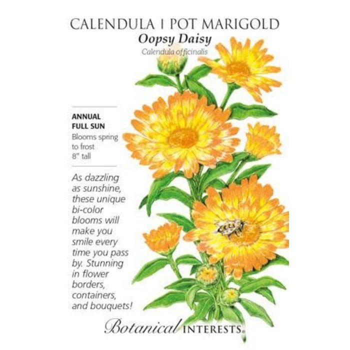 Seed Calendula Oopsy Daisy - Calendula officinalis