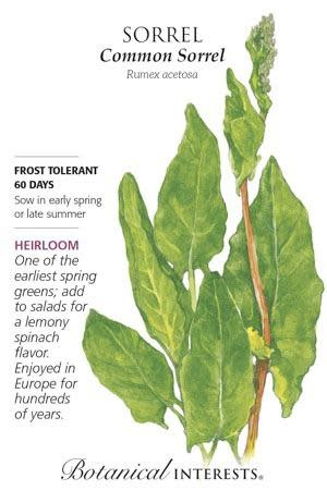 Seed Sorrel Common Heirloom - Rumex acetosa