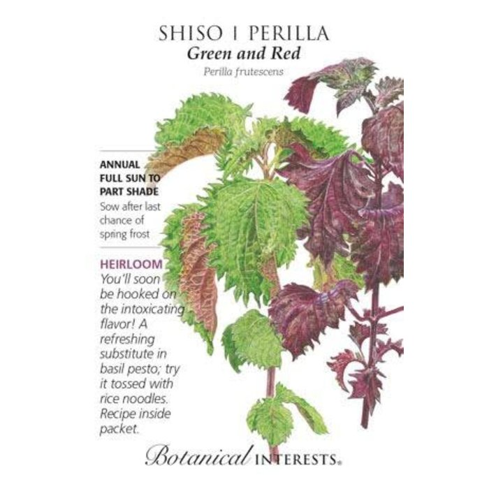Seed Shiso Perilla Green and Red Heirloom - Perilla frutescens