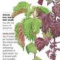 Seed Shiso Perilla Green and Red Heirloom - Perilla frutescens