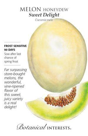 Seed Melon Honeydew Sweet Delight - Cucumis melo