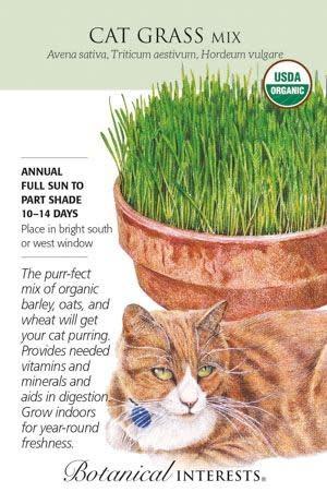 Seed Cat Grass Mix Organic - Avena sativa, Triticum aestivum, Hordeum vulgare