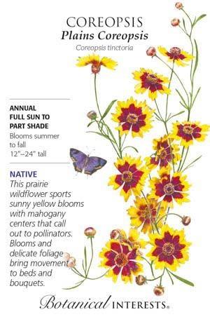 Seed Coreopsis Plains Coreopsis Heirloom Native - Coreopsis tinctoria
