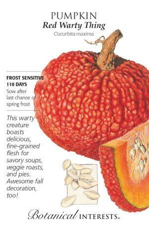 Seed Pumpkin Red Warty Thing - Cucurbita maxima