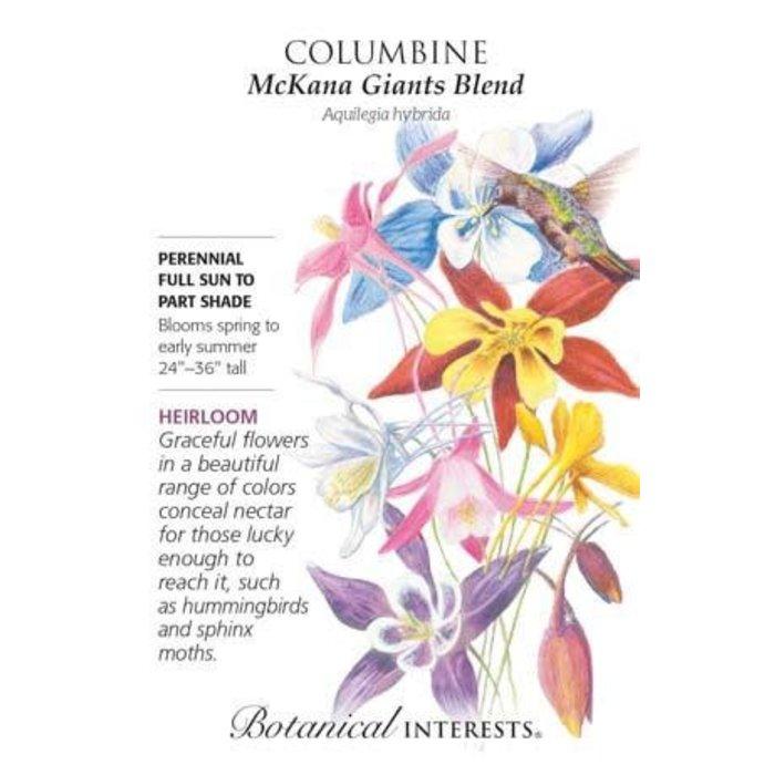Seed Columbine McKana Giants Blend Heirloom - Aquilegia hybrida