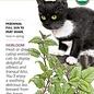 Seed Catnip Organic Heirloom - Nepeta caratia